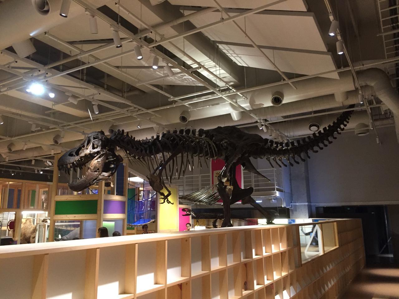 画像: 通常大人はコンパス内のティラノサウルスを横〜後ろからしか見る事ができません。