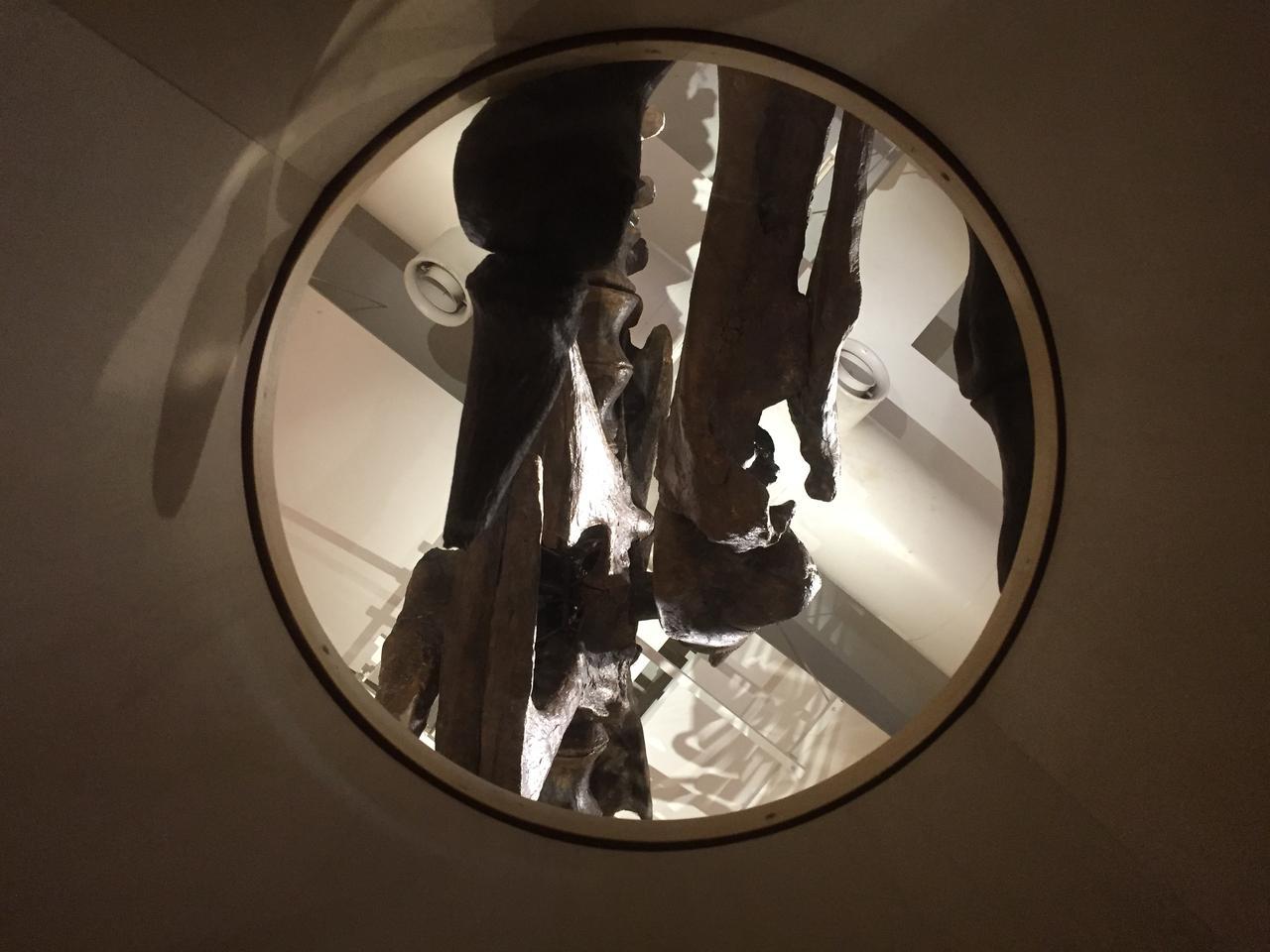 画像: 下から覗いた図。大人だけでなく子どものティラノサウルスも覗けます。
