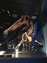 画像: スピノサウルス