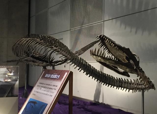 画像: 首長竜はどうしてこんなに恐ろしく感じるのでしょう…と見るたびに思います。