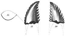 画像: 歯 en.m.wikipedia.org