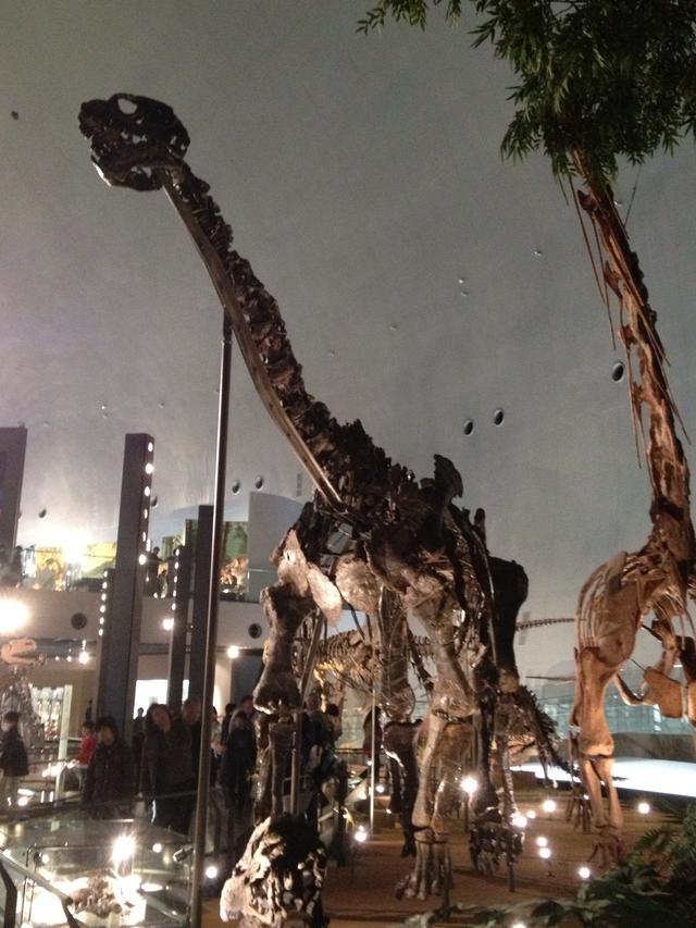 画像: カマラサウルス。