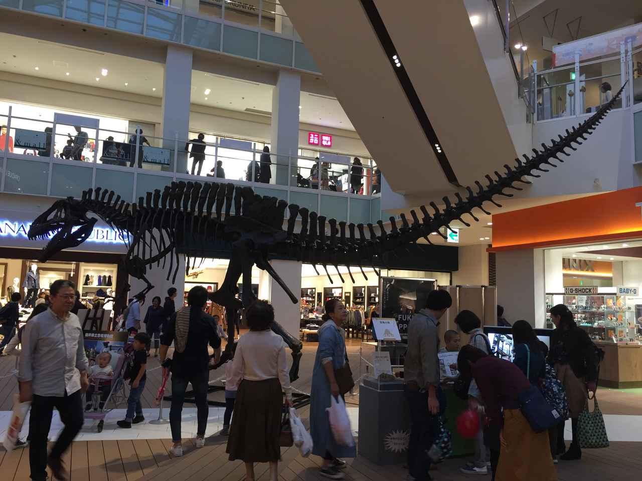 画像: アクロカントサウルス