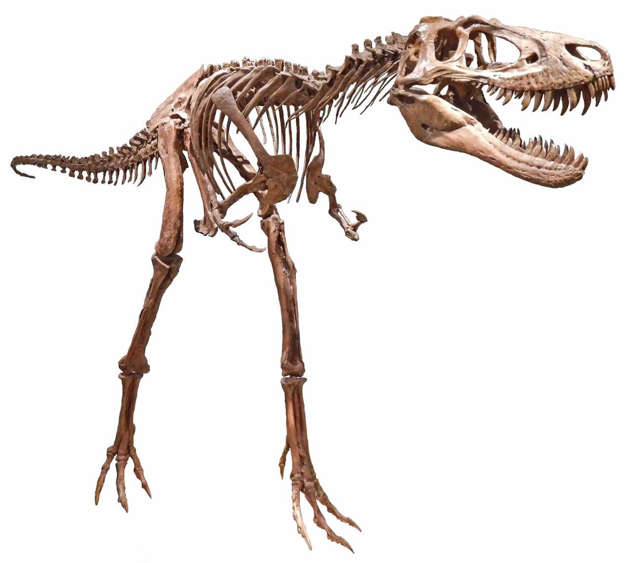 画像4: 恐竜ミュージアム in ちば - 千葉県立中央博物館
