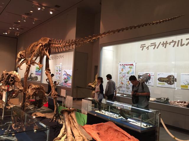画像: 後ろあしが長いティラノサウルス