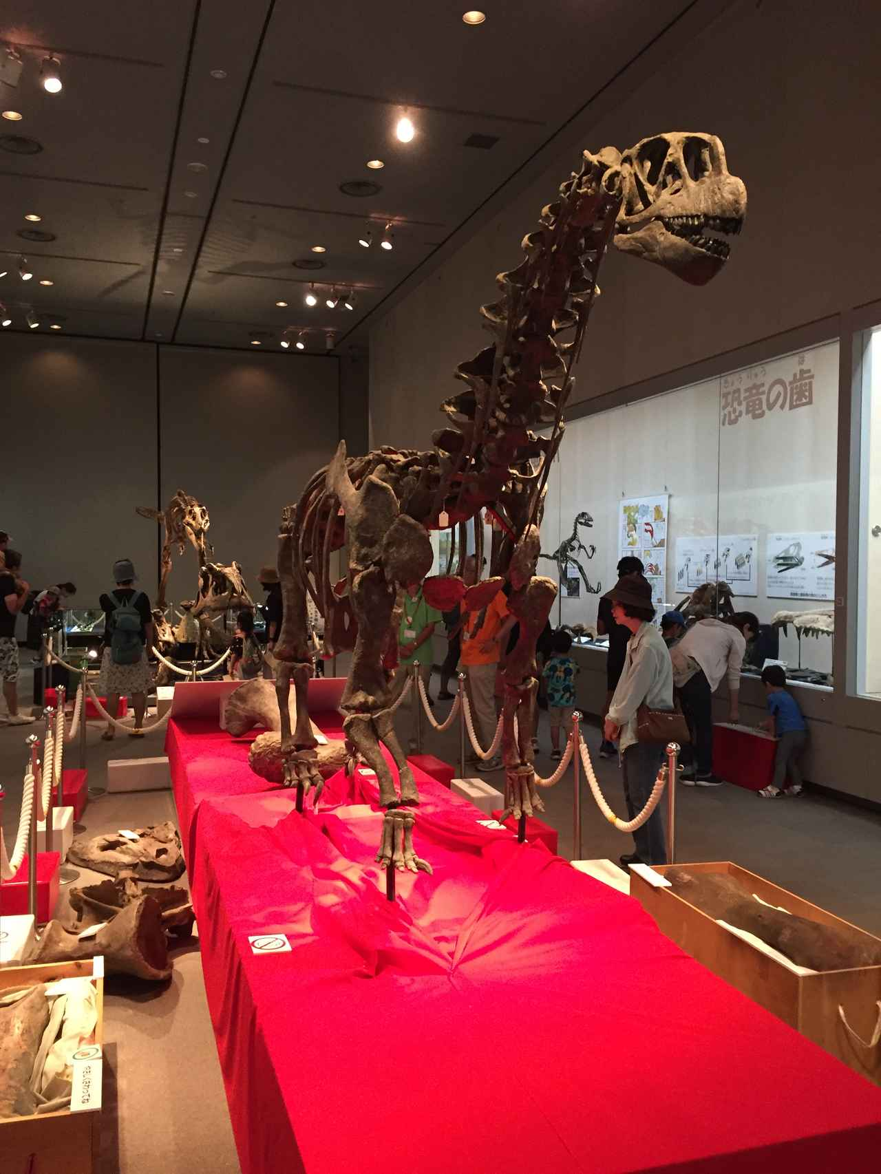 画像: カマラサウルス