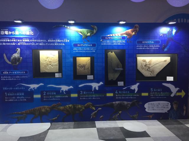 画像1: 恐竜くんプロデュース 恐竜スカイミュージアム~鳥は恐竜だった!~