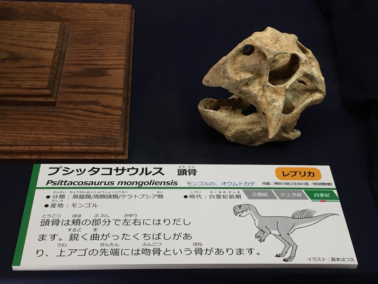 画像: 学名の意味が素敵すぎる恐竜
