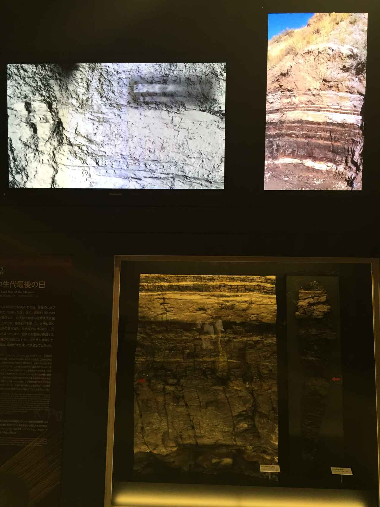 画像: 国立科学博物館