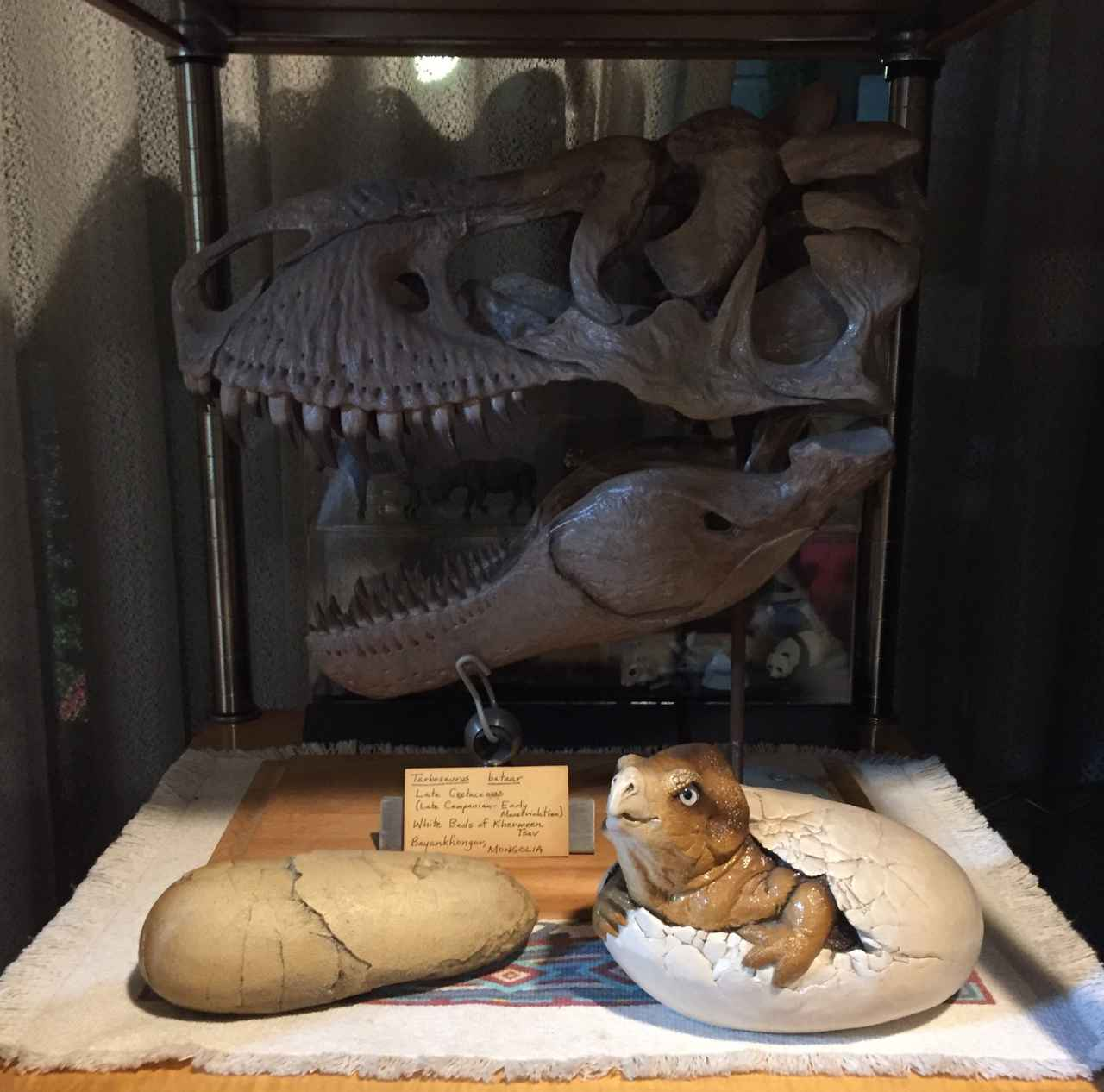 画像5: !?特攻の拓の所さんの約30年で集めた大量すぎる恐竜コレクション