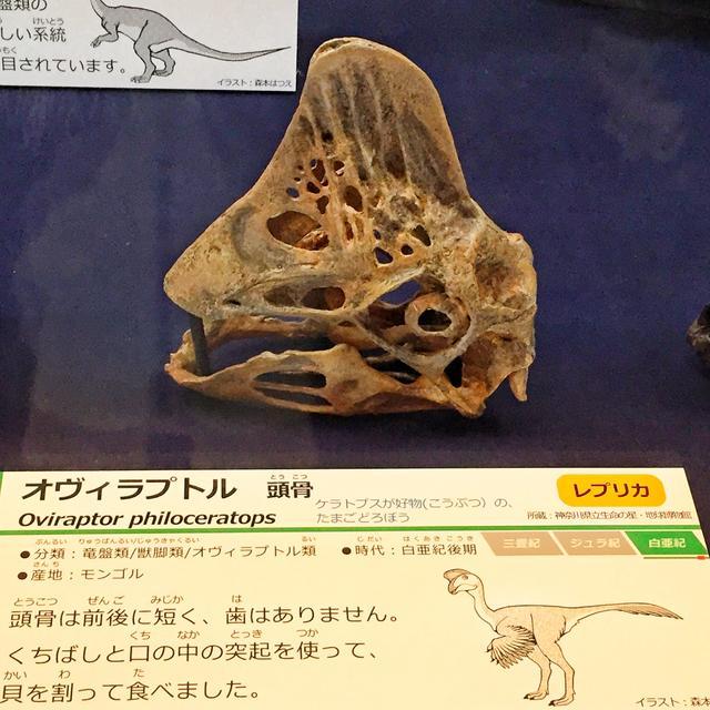 画像1: 人間にはない目の周りにある骨とは!?化石からわかる事