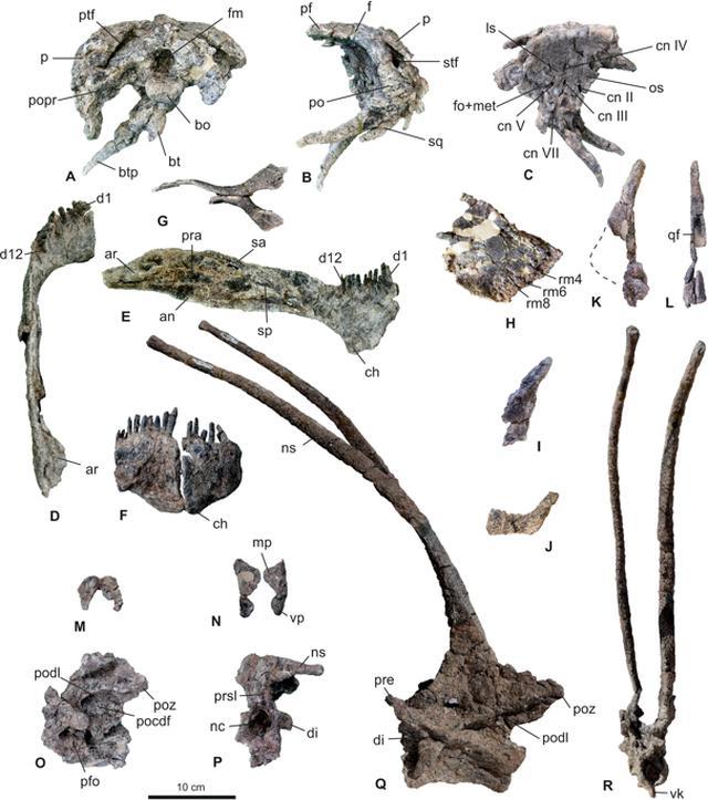 画像2: www.nature.com