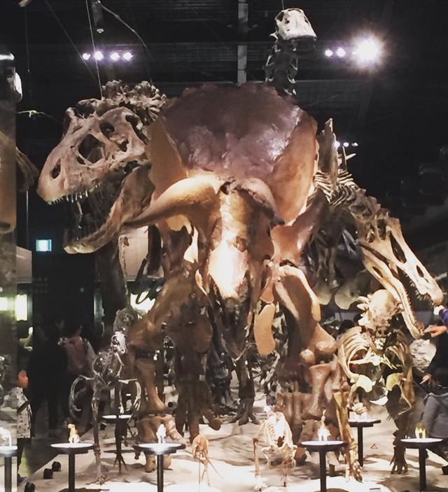 画像1: 恐竜類とは?恐竜の特徴と定義は違うので覚えておこう!