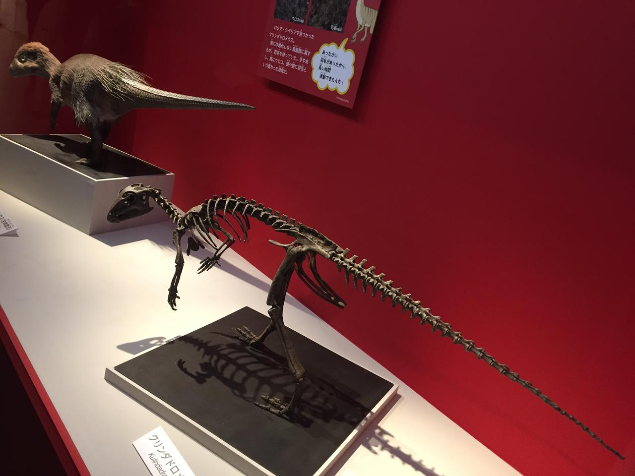 画像1: うろこと羽毛がある鳥盤類クリンダドロメウスの発見で考えられる事