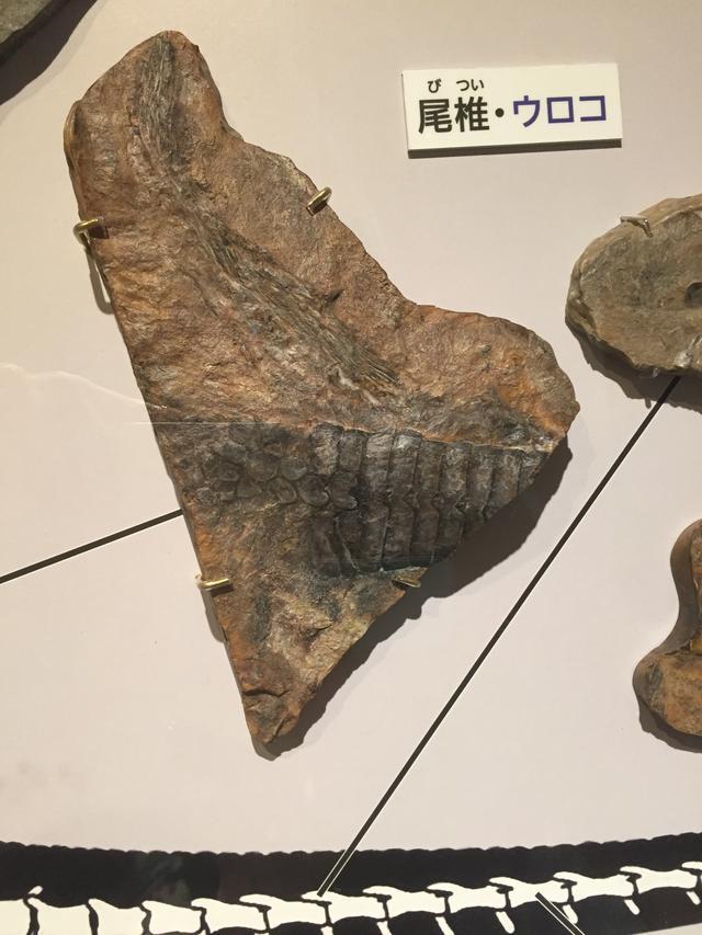 画像3: うろこと羽毛がある鳥盤類クリンダドロメウスの発見で考えられる事