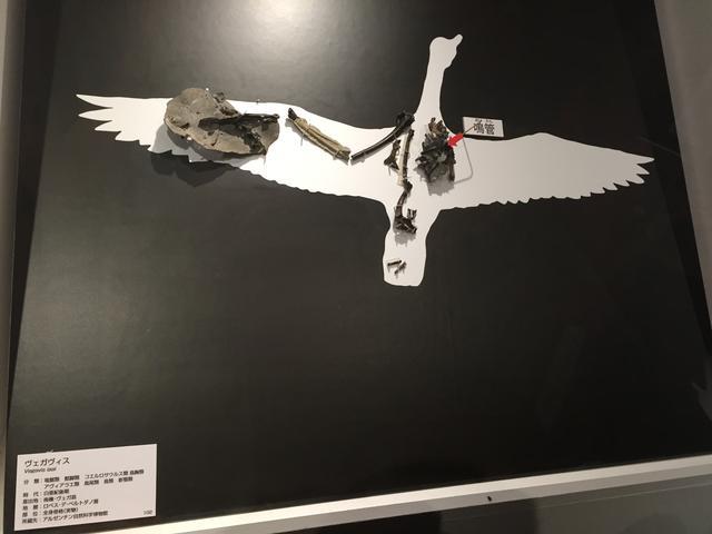 画像: 「これからの恐竜学」エリア