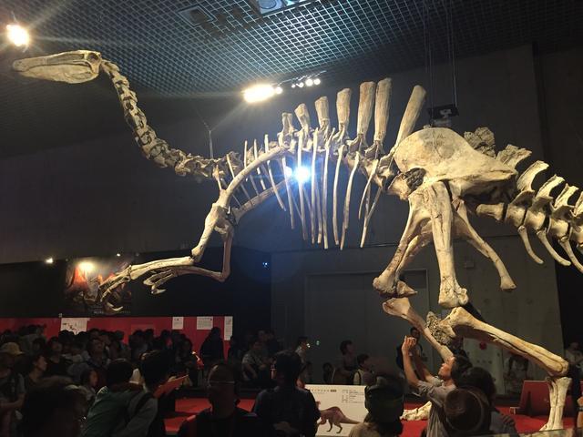 画像1: 「ベールを脱いだ謎の恐竜」エリア