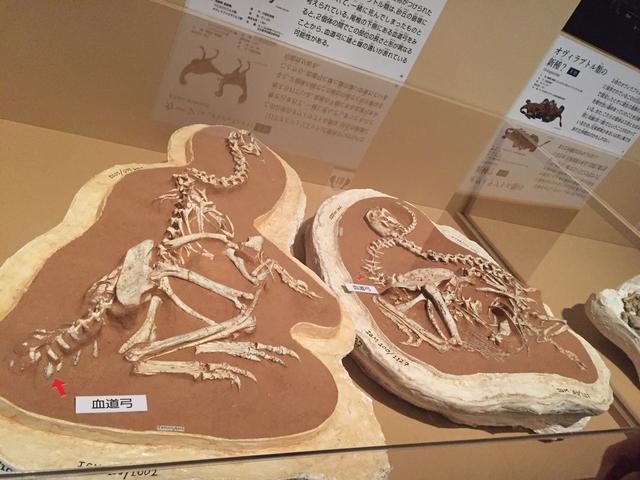 画像: 「最新研究からみえてきた恐竜の一生」エリア
