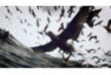画像: 今年はロシアから『リヴァイアサン(英題) / Leviathan』が外国語映画賞にノミネート!ロシア、米アカデミー賞の生放送はなし【第87回アカデミー賞】