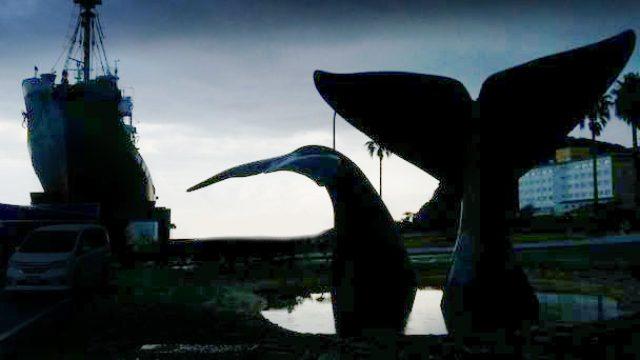 画像: 佐々木 芽生監督が世界に問う、捕鯨問題の真相を解く、ドキュメンタリー映画へのクラウドファンディングがスタートした