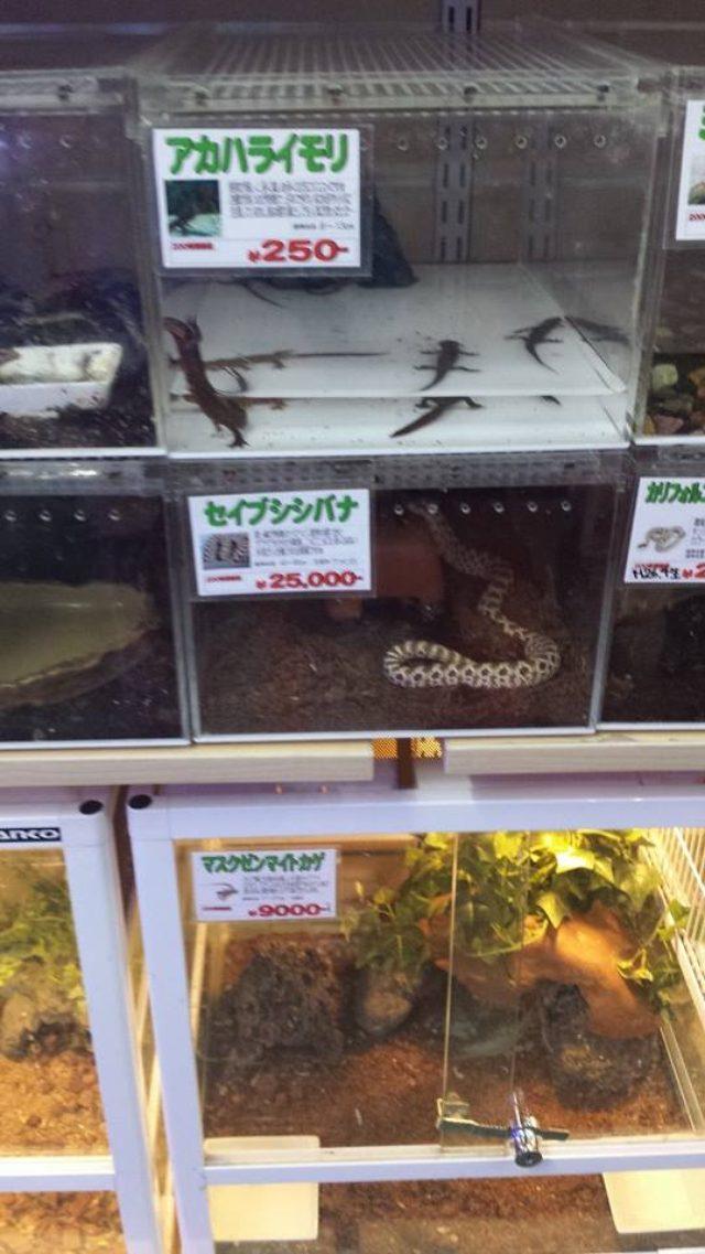 画像: 爬虫類コーナーで癒される、、、。 ©kanaishuntaro cinefil-asia