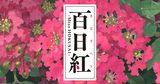 画像: 映画『百日紅~Miss HOKUSAI~』公式サイト
