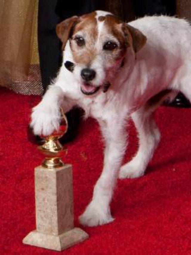 画像: ハリウッドで大活躍した名犬アギーが、現地時間7日にロサンゼルスで亡くなった。13歳であった。 http://www.hollywood-news.jp
