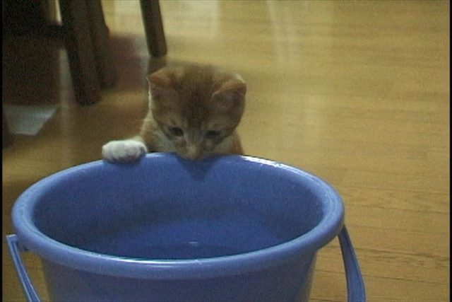 画像: 吉祥寺にゃんこ映画祭『みんな生きている~飼い主のいない猫と暮らして~』