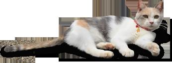 画像: 映画『先生と迷い猫』公式サイト