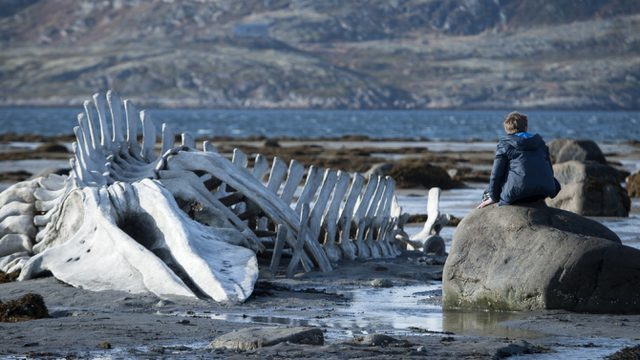 画像: http://variety.com/2014/film/festivals/cannes-film-review-leviathan-1201189022/
