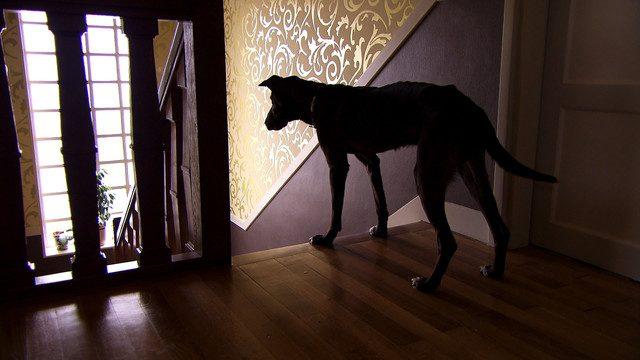 画像1: 「犬を連れた女性」 (c)MLD Films http://natalie.mu/eiga/news/162370