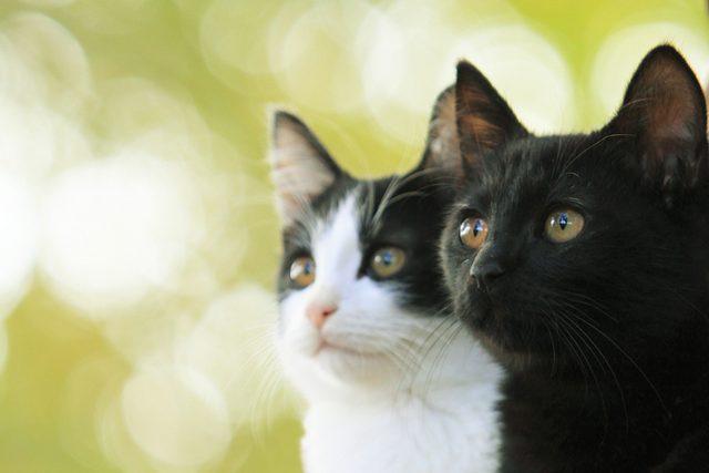 画像1: (C)2015杉作・実業之日本社/「猫なんかよんでもこない。」製作委員会