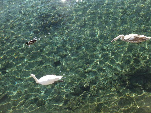 画像: 恐ろしいほど澄んだ湖水。夏は市民が水泳を楽しむと言う。