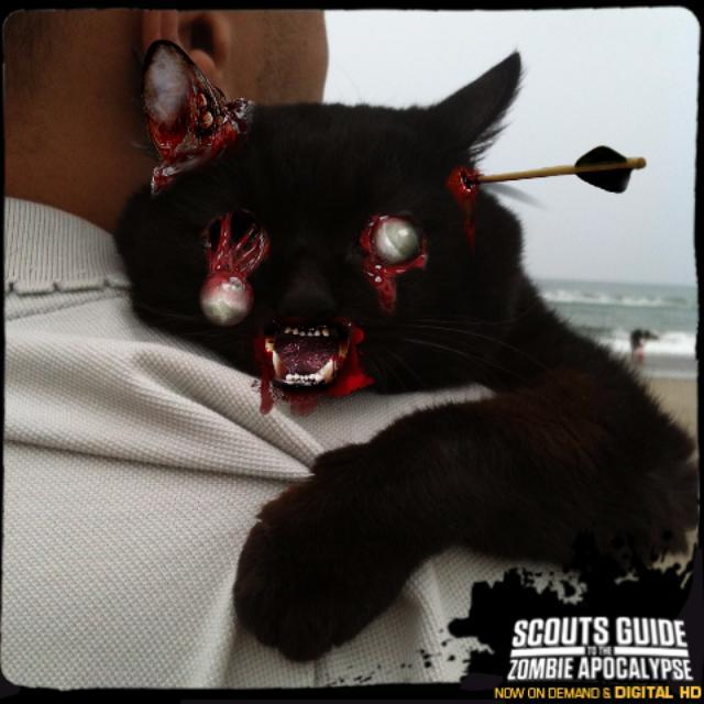 画像: ウチの黒猫をゾンビ−キャットにしてみた。本作のオフィシャルサイトに愛猫の画像を上げて、ゾンビ化して遊んでみよう。 www.scoutsandzombiesmovie.com