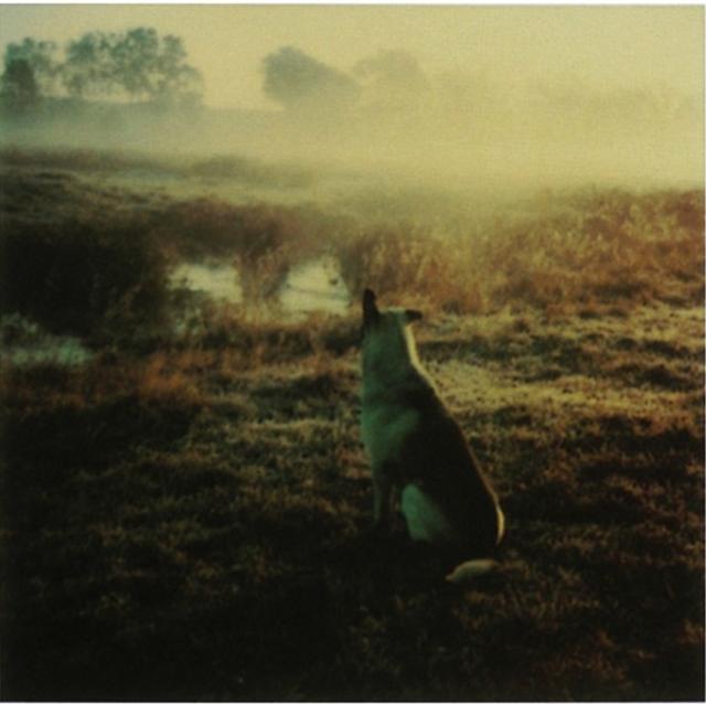 画像4: http://www.anothermag.com/art-photography/2939/andrei-tarkovskys-polaroids