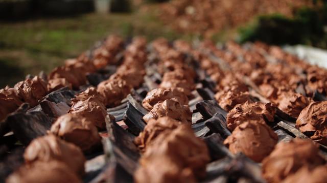 画像3: 土に根っこをおろし、伝統を未来につなぐ。 沖縄本島・読谷村の陶工・松田米司と、しまんちゅたちの物語。