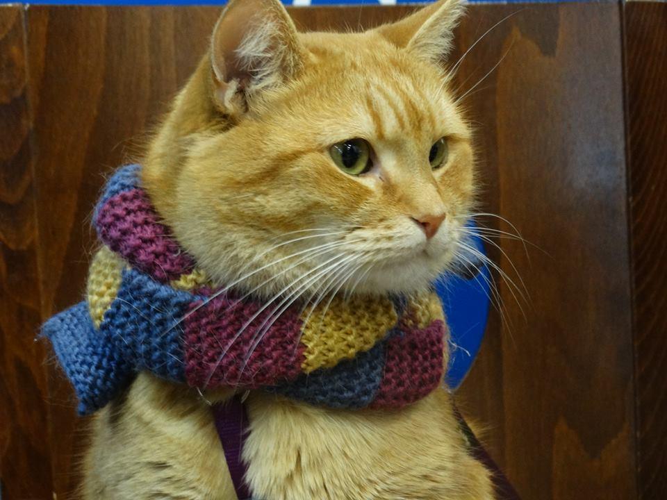 映画「ボブという名の猫」主演猫ボブがハマった日 …