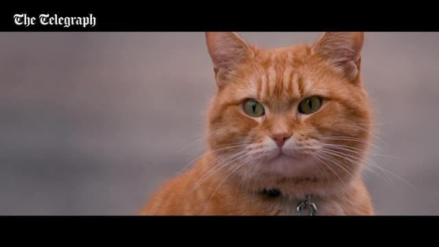画像: A Street Cat Named Bob: watch Luke Treadaway in the first trailer - along with his purrfect pal