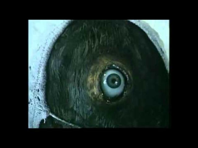 "画像: Jan Svankmajer's ""Little Otik"" trailer youtu.be"