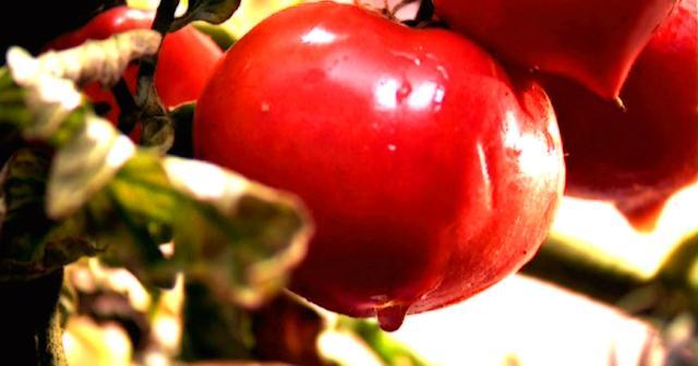 画像: 映画『トマトのしずく』公式サイト