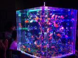 画像1: アートアクアリウム誕生10周年記念祭 「アートアクアリウム展~大阪・金魚の艶~&ナイトアクアリム」