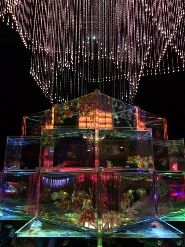 画像3: アートアクアリウム誕生10周年記念祭 「アートアクアリウム展~大阪・金魚の艶~&ナイトアクアリム」
