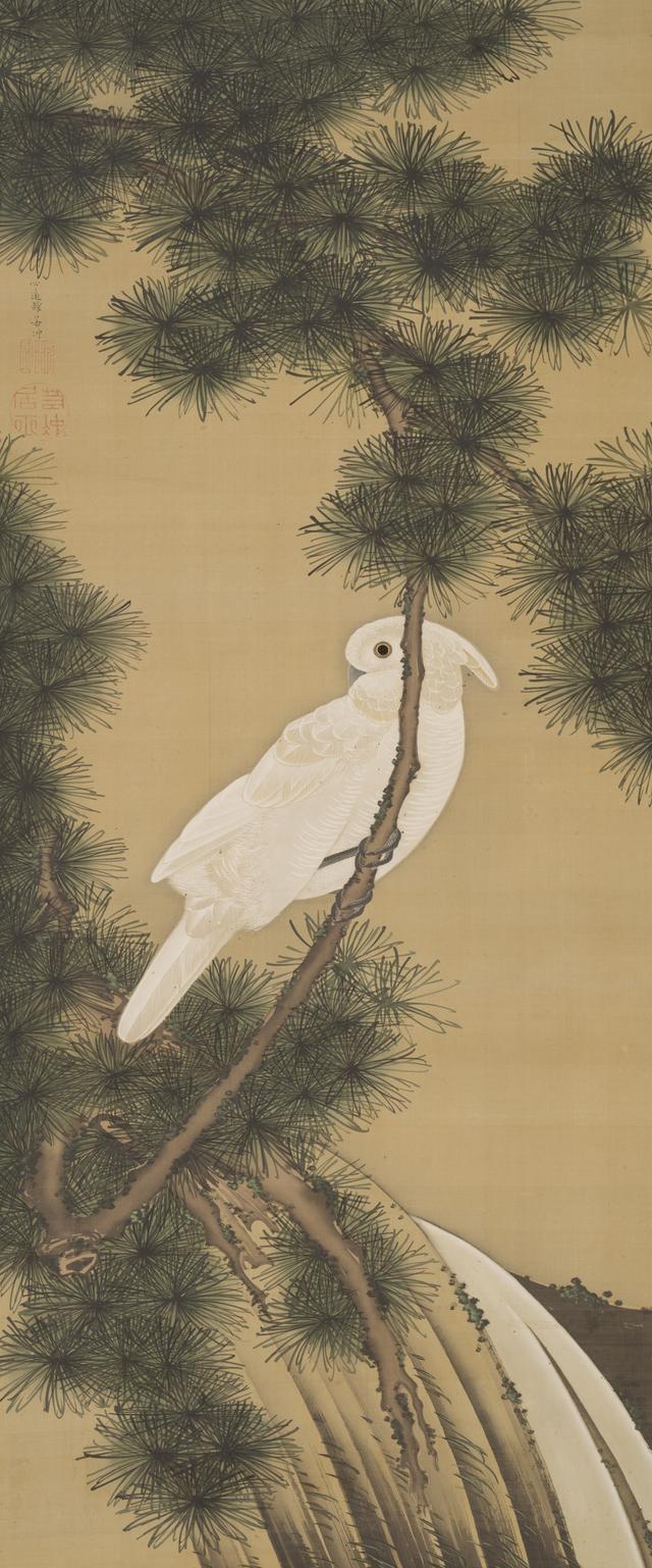 画像: 老松鸚鵡図 個人蔵 (通期)