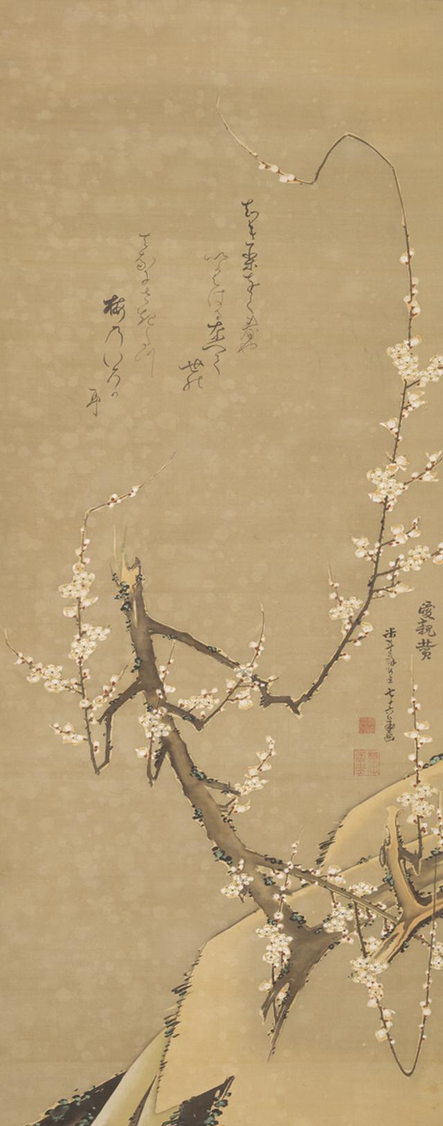 画像: 梅花図   個人蔵 (通期)