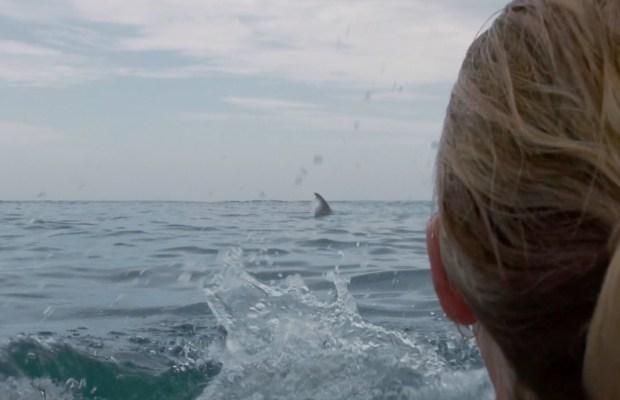 画像: 'Cage Dive' Finds Footage From Latest Shark Attack! (Exclusive Trailer) - Bloody Disgusting!