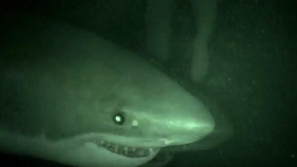 画像: http://www.commeaucinema.com/vu-sur-le-net/cage-dive-un-premier-trailer-hyper-angoissant,353754