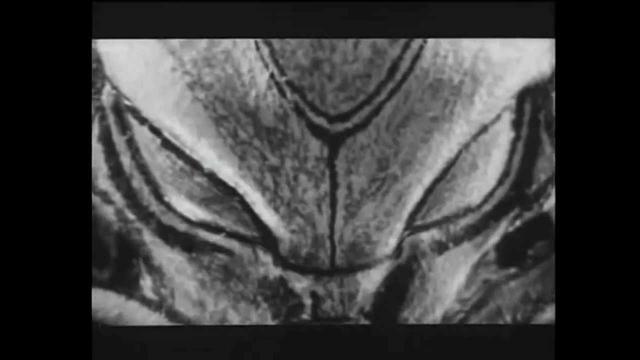 画像: Electric Dragon 80,000V (2001) HD - YouTube youtu.be
