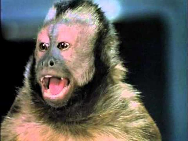 画像: Monkey Shines Official Trailer #1 - Stanley Tucci Movie (1988) HD youtu.be