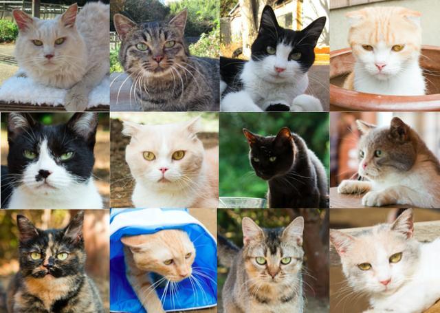 画像1: 主演 伊藤淳史&ヒロイン 忽那汐里もゾッコン!ネコ好きにはたまらない−12匹の猫界のスタープレイヤーを発表!映画『ねこあつめの家』