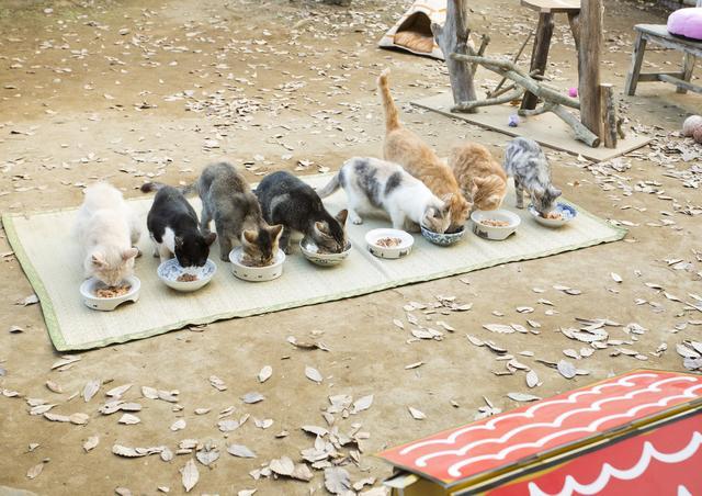 画像3: 主演 伊藤淳史&ヒロイン 忽那汐里もゾッコン!ネコ好きにはたまらない−12匹の猫界のスタープレイヤーを発表!映画『ねこあつめの家』